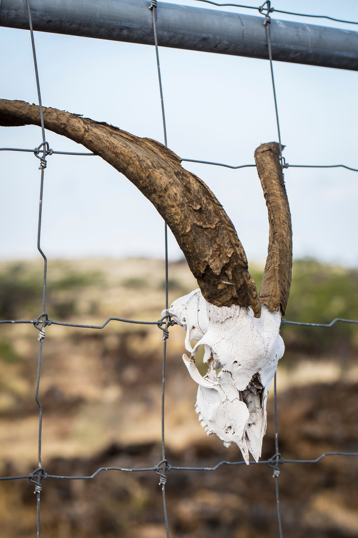 skull-goat-fence-Waikoloa-Village-Hawaii-Island-South-Kohala-301.jpg