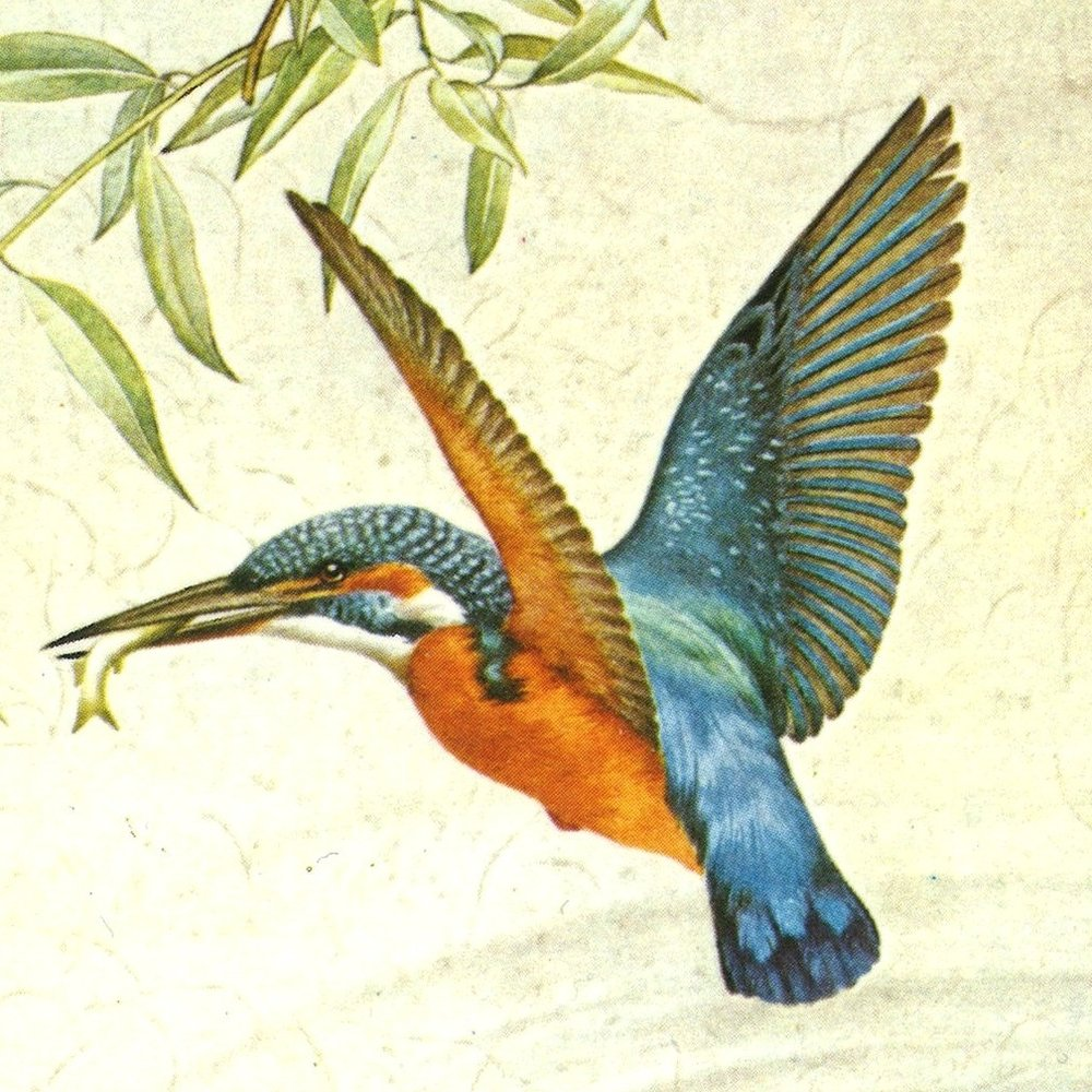 The Kingfisher - from The Kingfisher