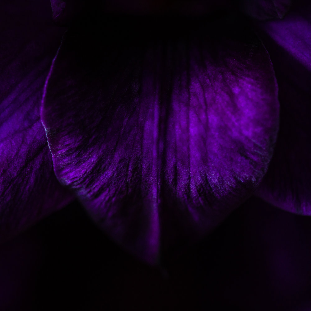 Three Faces Under A Hood: - The Many Aspects of Violet