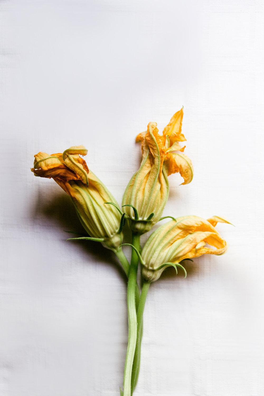 Zucchini flowers | photography & styling by Joske Simmelink