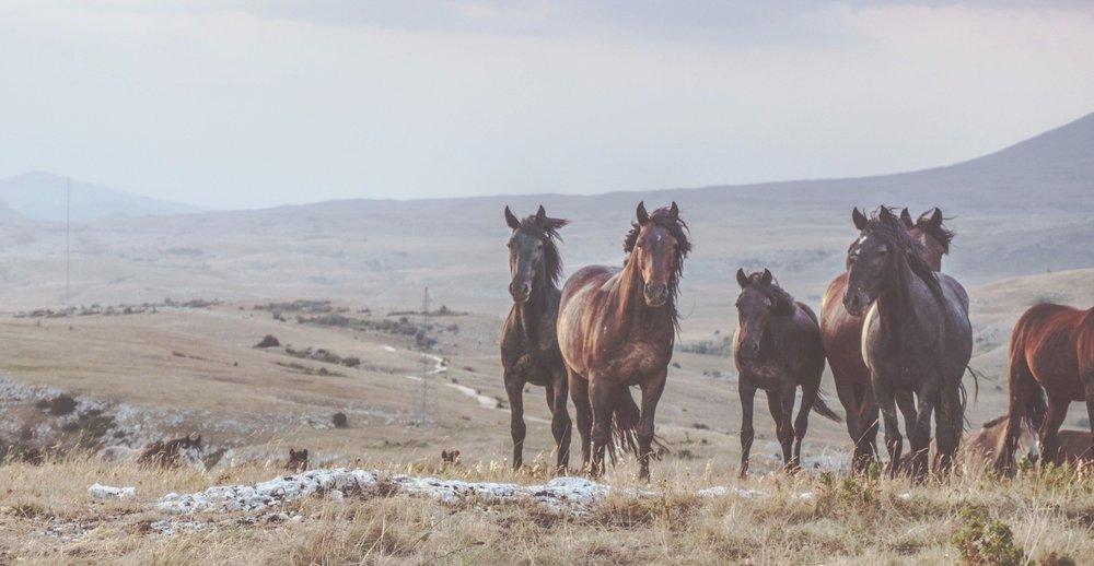 farm & ranch insurance -