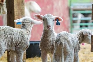 2017 May Conservancy Farm Tour BCS Livestock-0791.jpg
