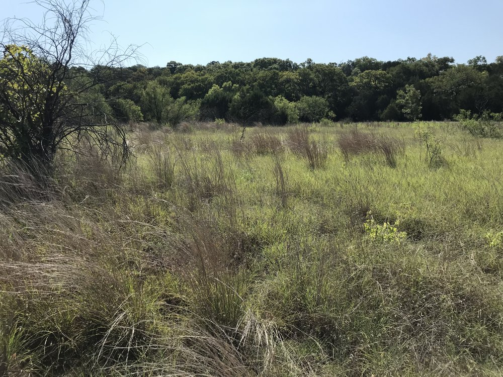 Nature Conservancy, Barton Creek