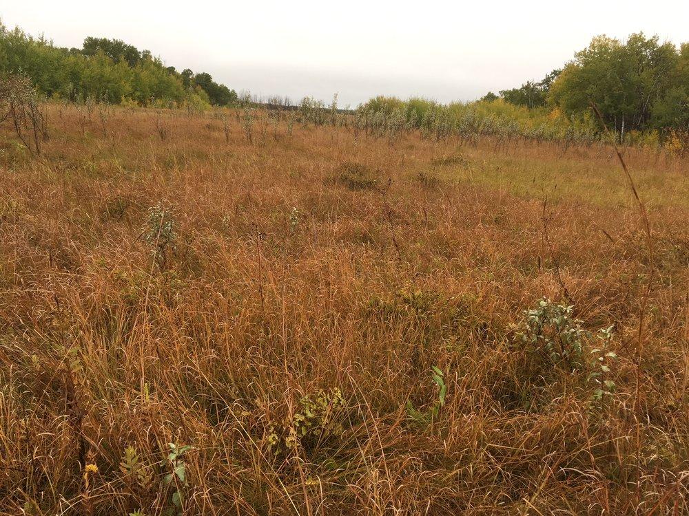 Manitoba Tallgrass Prairie Preserve, Canada,