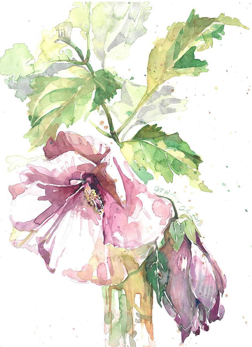 Hibiscus & Coleus Leaves