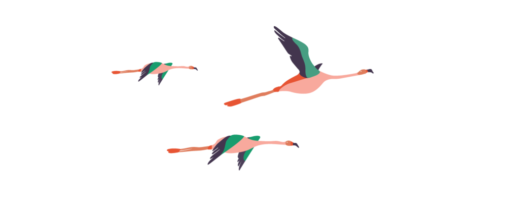 allisons-birds.png
