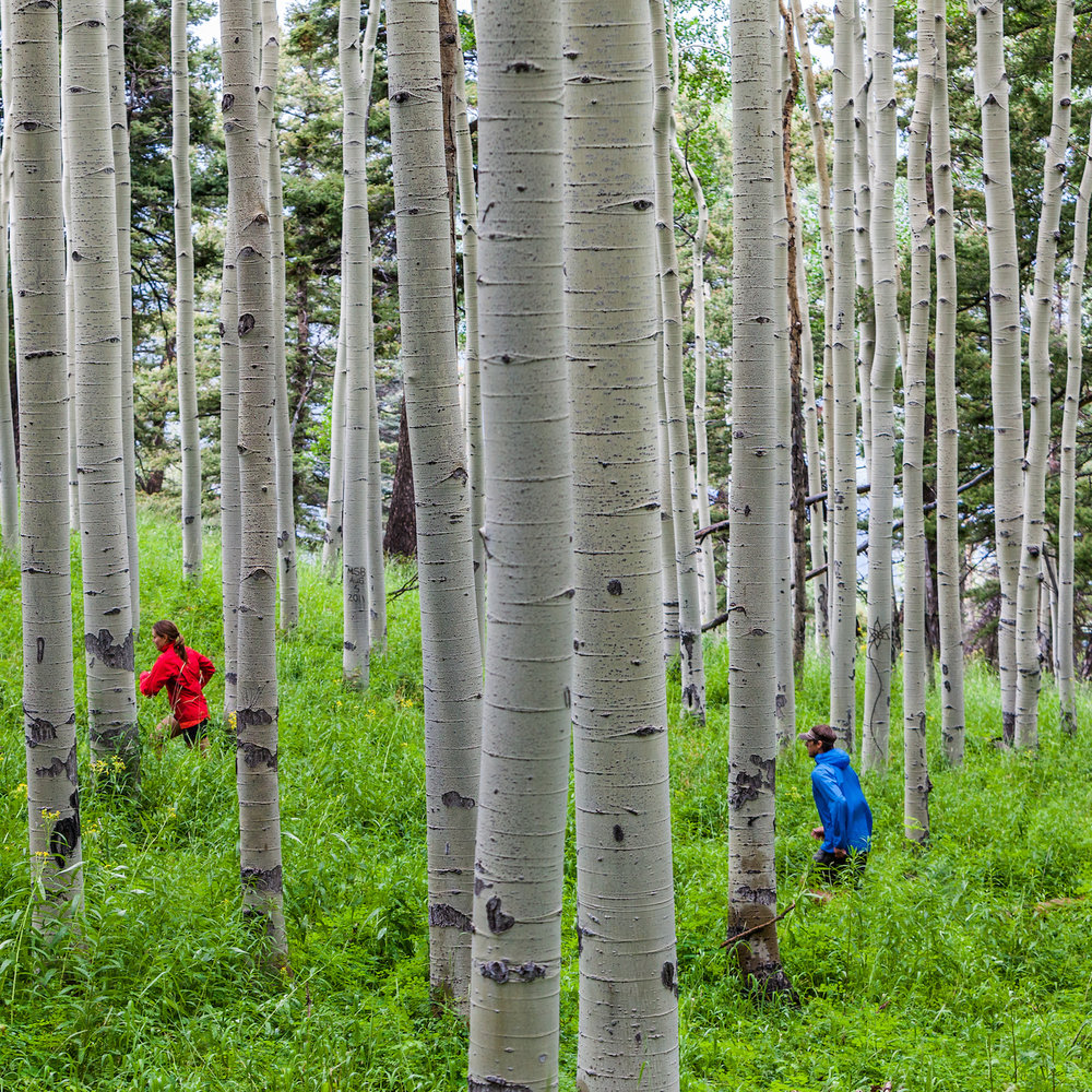 TELLURIDE TRAIL RUNNING RETREAT - 4-Day trail running retreat around the beautiful mountain town of Telluride, Colorado• August 15 -18, 2019 • September 19 - 22, 2019 •