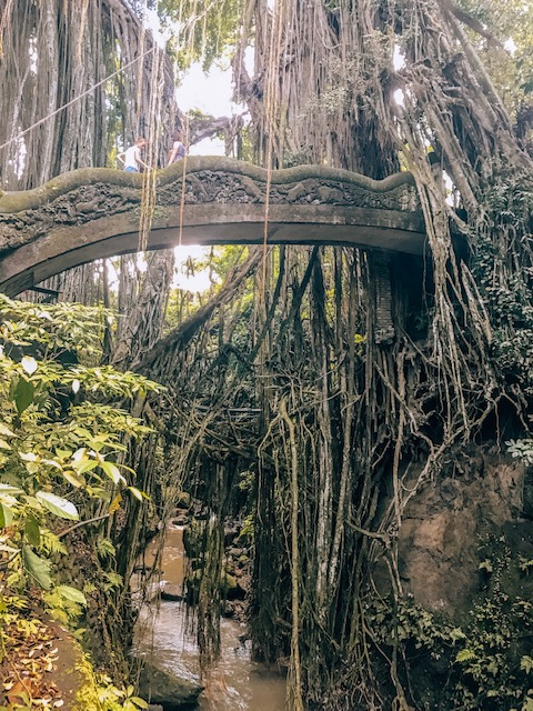 Ubud- Monkey Forest