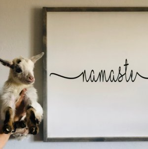 Yogi Goats at Noble Wellness Studio