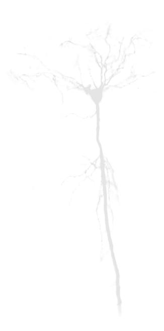 Neuron 2.jpg