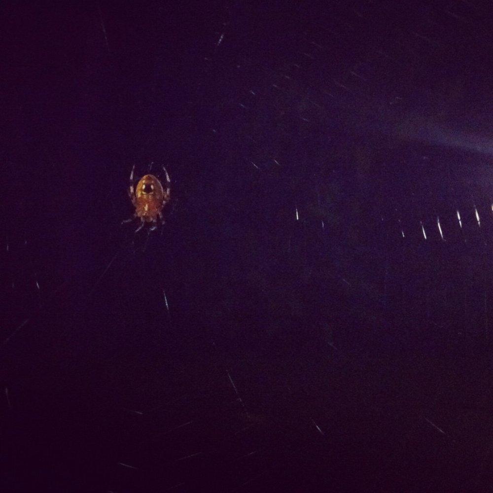 Spider_Barney