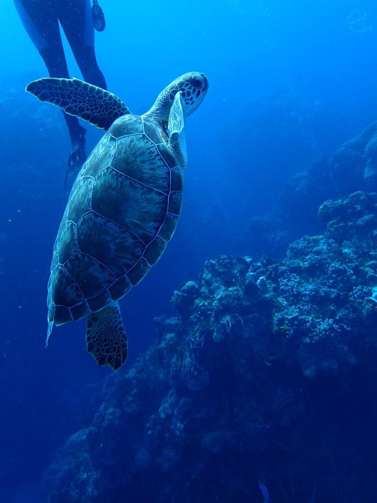 turtle-before.jpg
