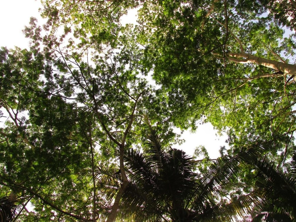 NZ bush