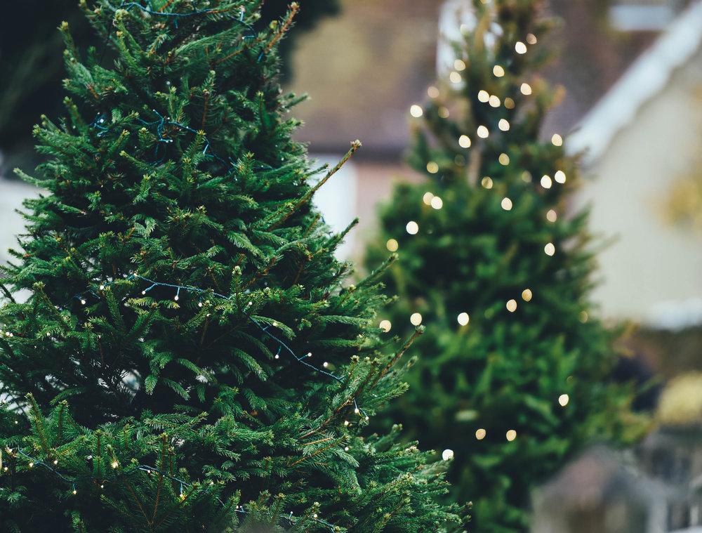 Saanichton Christmas Tree Farm