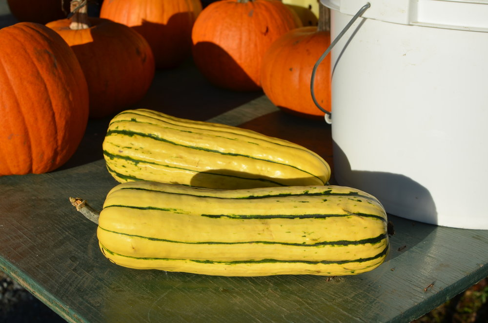 Delicata Squash / Sweet Potato Squash - Thin skinned with a creamy soft consistency similar to sweet potatoes.Ideal baked, sautéed, steamed or stuffed.