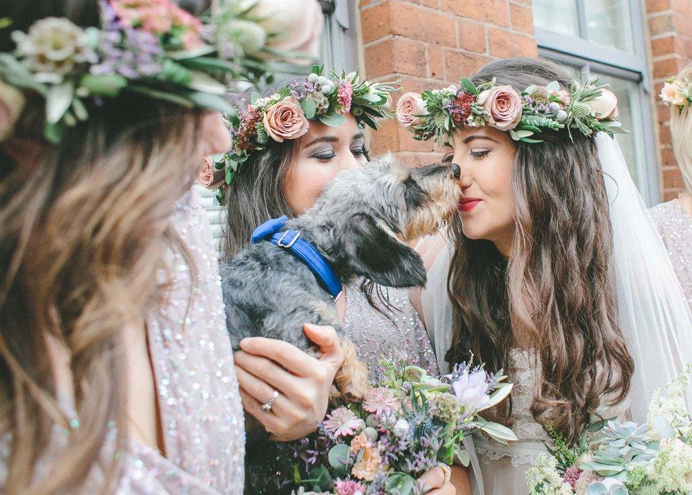 99 Mary Street Wedding Dogs at Weddings