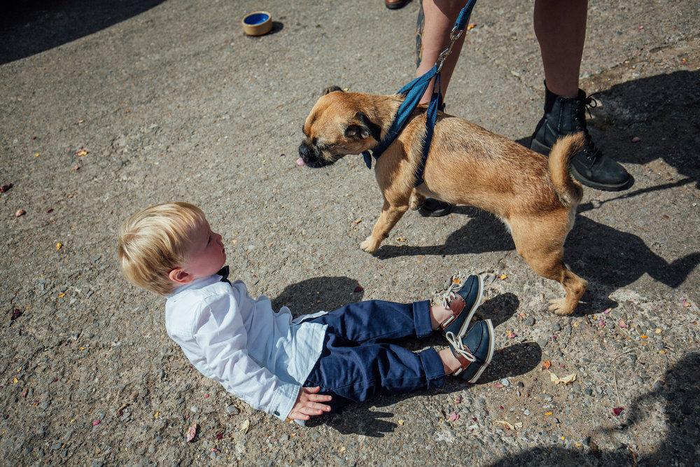 Sheffield Wedding Photographer Dogs at Weddings Whirlow Hall Farm