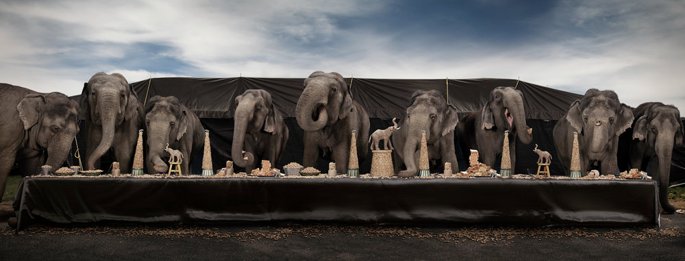 "The Elephant Feast  United States, 2013  10""x26"" 