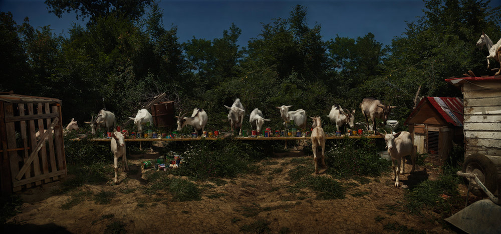"The Goat Feast  Bosnia, 2013  10""x21"" 