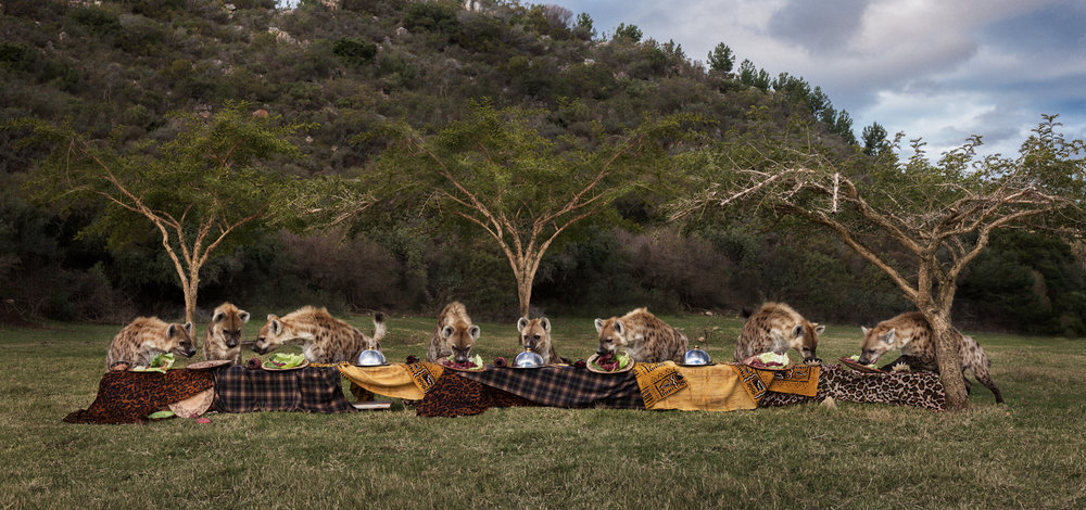 "The Hyena Feast  South Africa, 2016  10""x21"" 