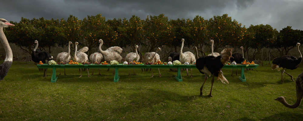 "The Ostrich Feast  South Africa, 2016  10""x25"" 