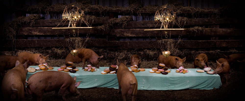 "The Pig Feast  United Kingdom, 2010  10""x24"" 