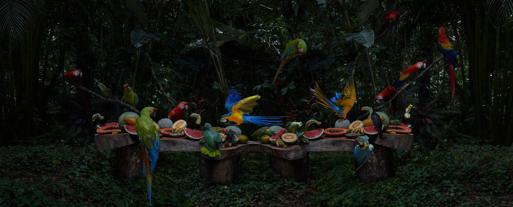 "The Tropical Bird Feast  Honduras, 2014  10""x24.5"" 