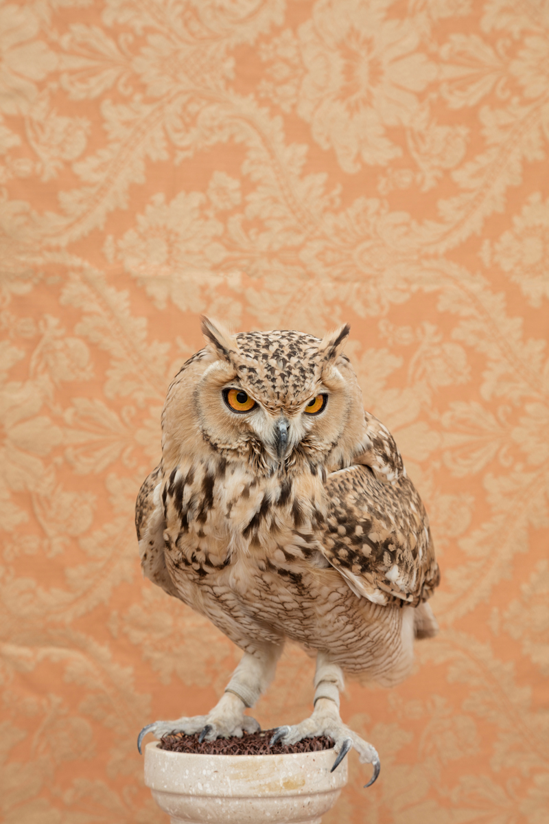 HORNED OWL NO. 4794
