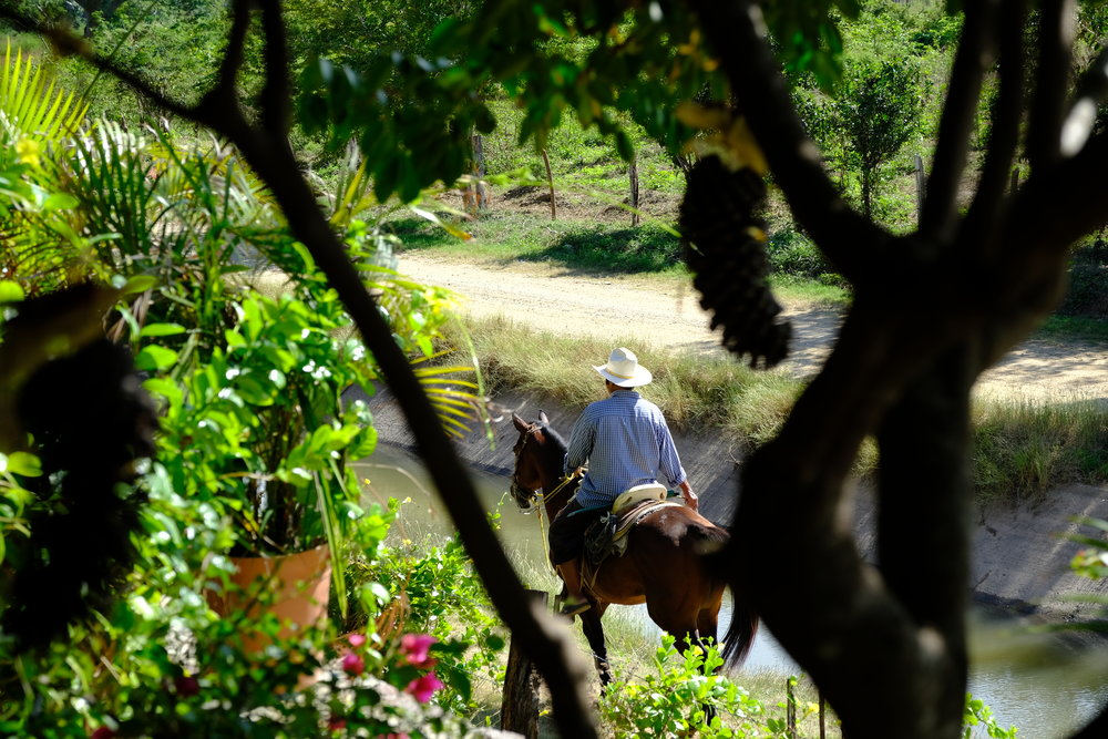 Flavien horse photo.JPG