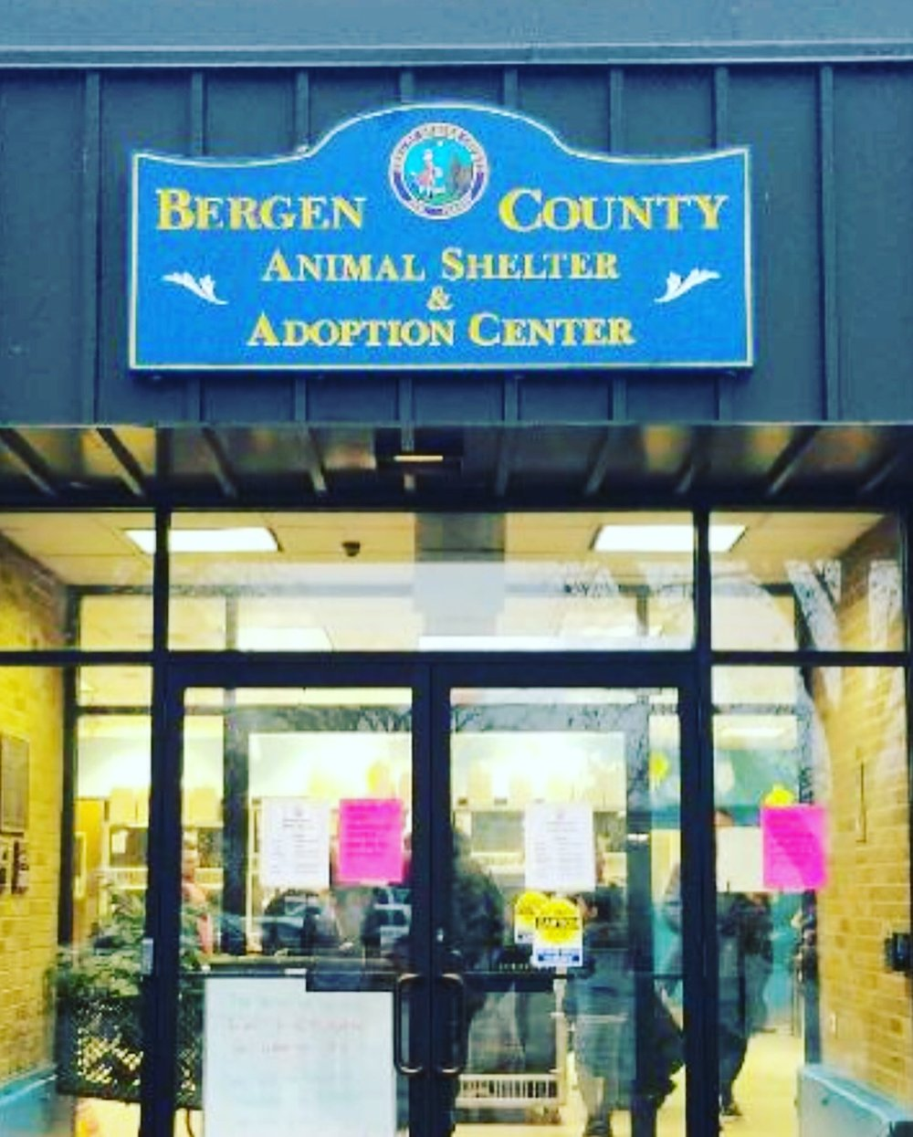 Supporting a local Animal Shelter