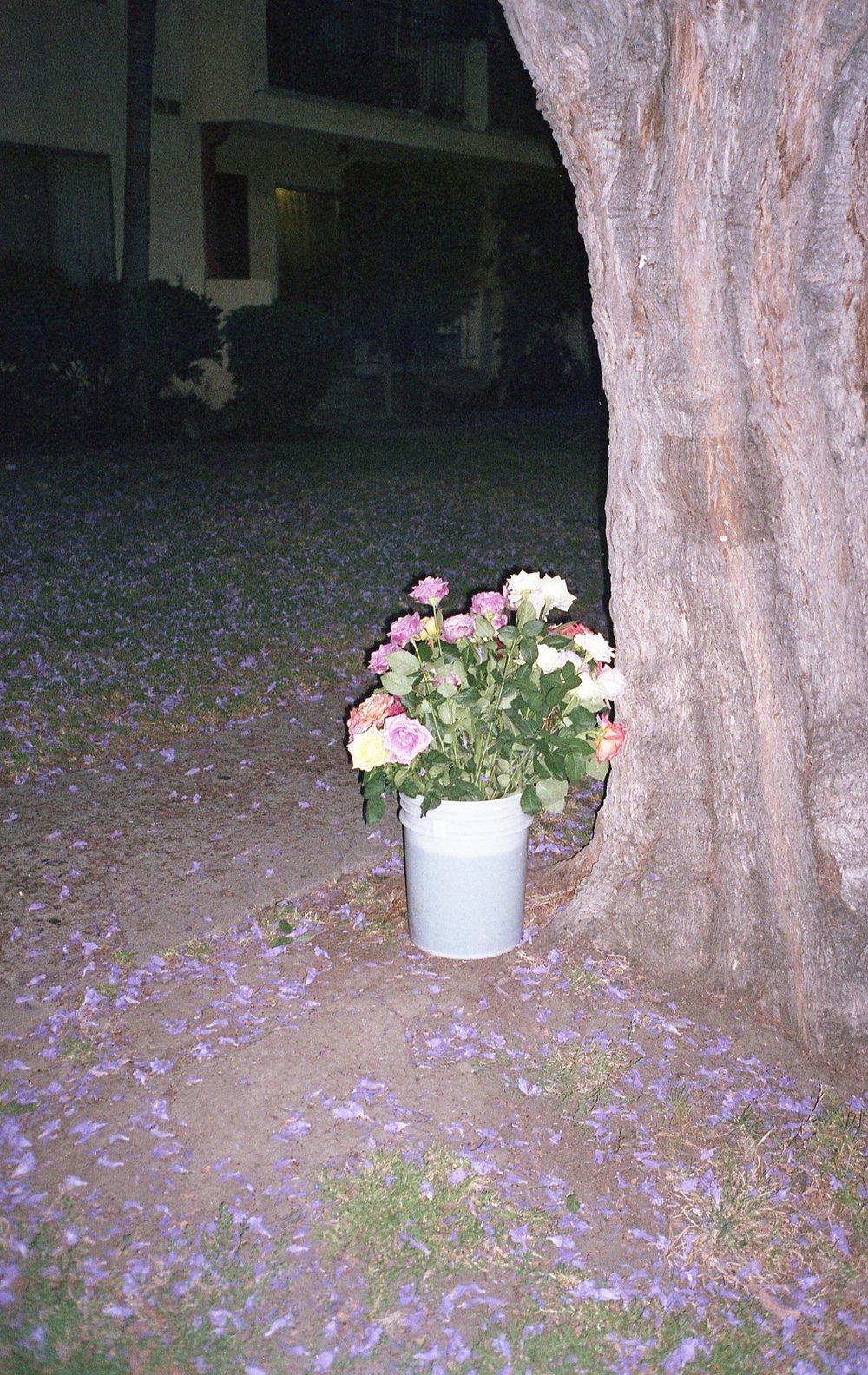 veniceblvd024.jpg