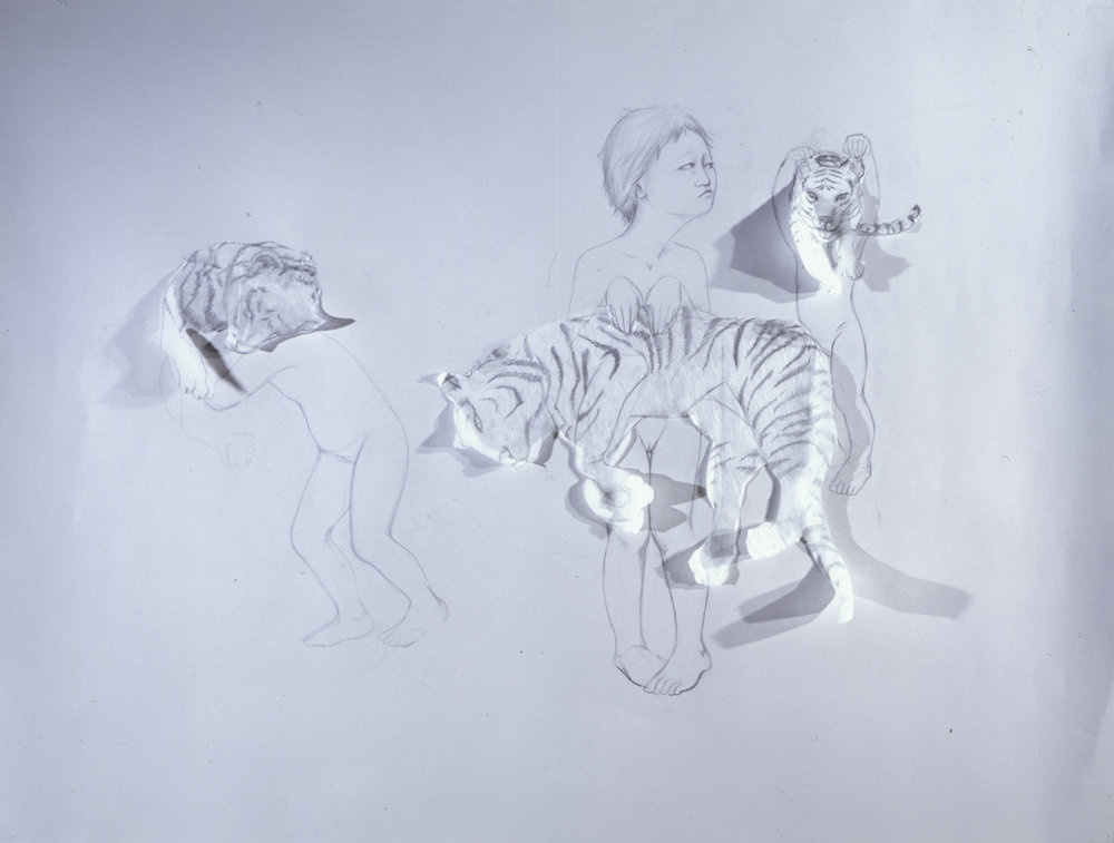 Paper Tigers , 2004 Graphite, kozo on gray paper 38 X 50 inches