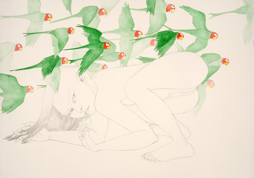 Parrots , 2010 Graphite, watercolor on ivory paper 19 3/4 x 28 inches Created while in residency at the Contemporary Museum, Honolulu, HI