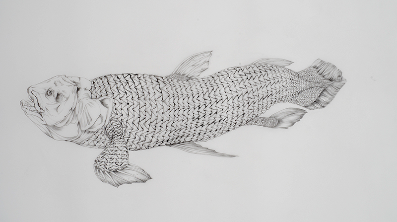 Coelacanth , 2014 Graphite on drafting film 22 x 30 inches Photo: Bill Orcutt