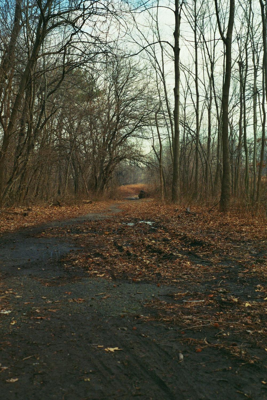 Way back in the woods. Pelham Bay Park, The Bronx.  Kodak Ultra Max 400. Pentax K1000. Fletcher Berryman 2019.