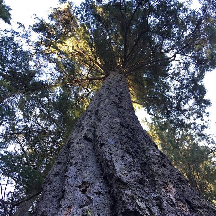 big tree 1.jpg