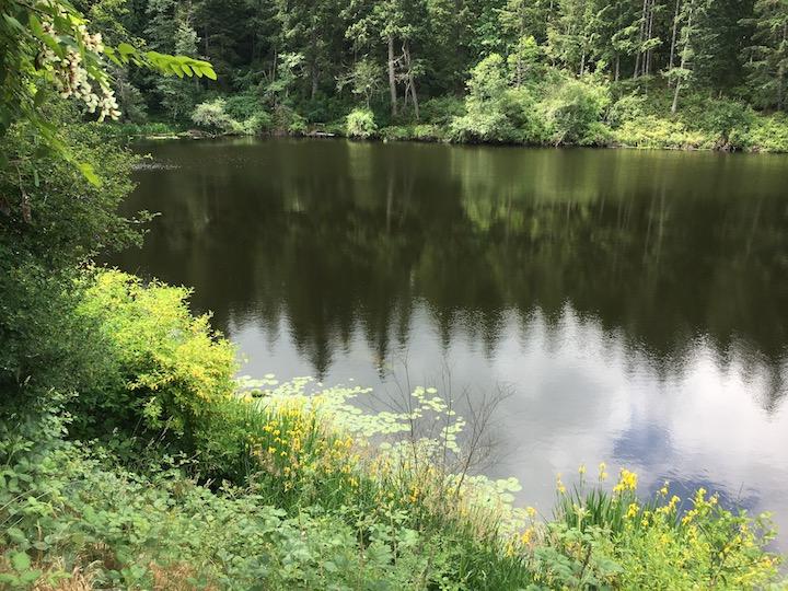 Lake left.jpg