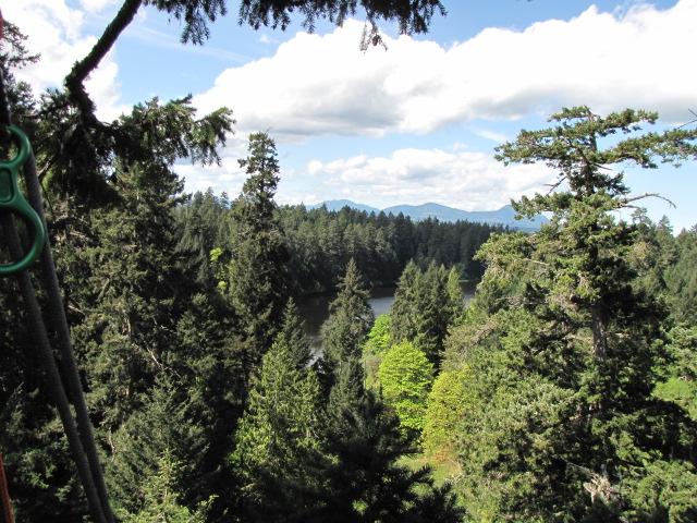 canopy-view.JPG