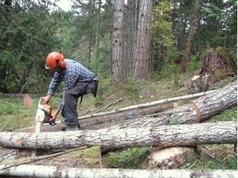 Timber Harvest 2017 Cutting the logs.jpg