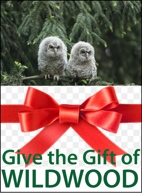 Give the Gift 2018.png