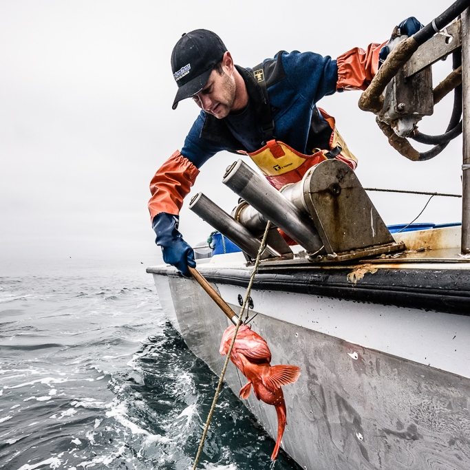 The Fisherman - Learn about these hard-working commercial fishermen haul in the fish being served using a variety of methods.