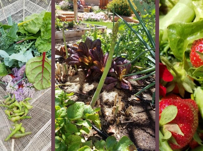 02-02-epic-salad-mid-spring-header-2.jpg
