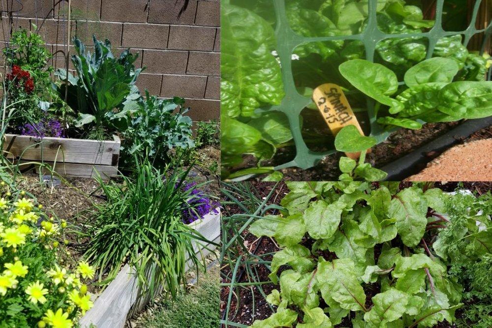 epic-salad-04-1024x683.jpg