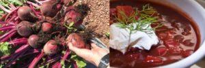 borscht-300x100.jpg