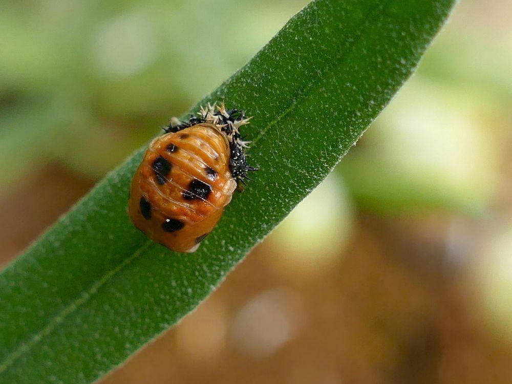 Ladybug 2.jpg