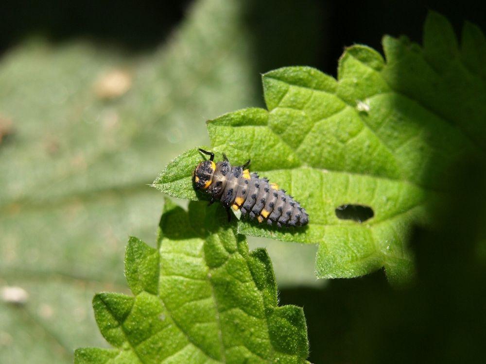 ladybug 3.jpg