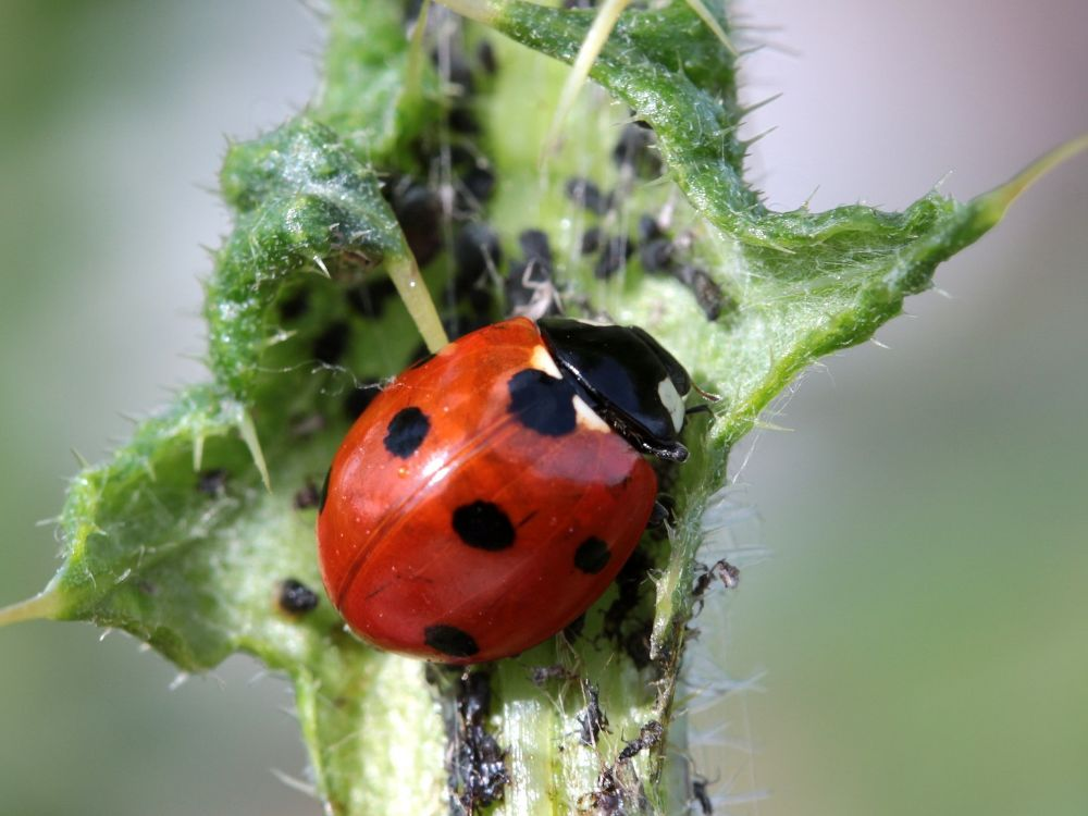 Ladybug 4.jpg