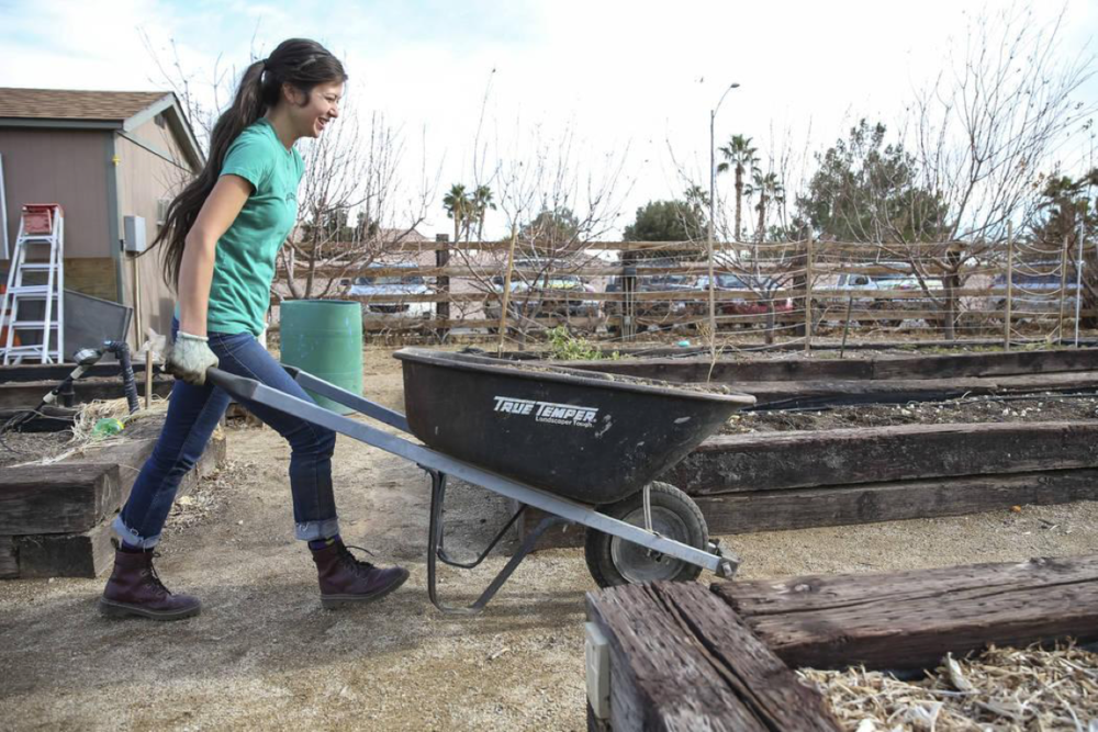 Garden Farms Foundation executive director Vanessa Portillo navigates a wheelbarrow with manure to a garden bed in preparation for early spring planting during a volunteering event at the San Miguel Community Garden located at 3939 Bradley Road in Las Vegas on Saturday, Jan. 12, 2019. Richard Brian Las Vegas Review-Journal @vegasphotograph