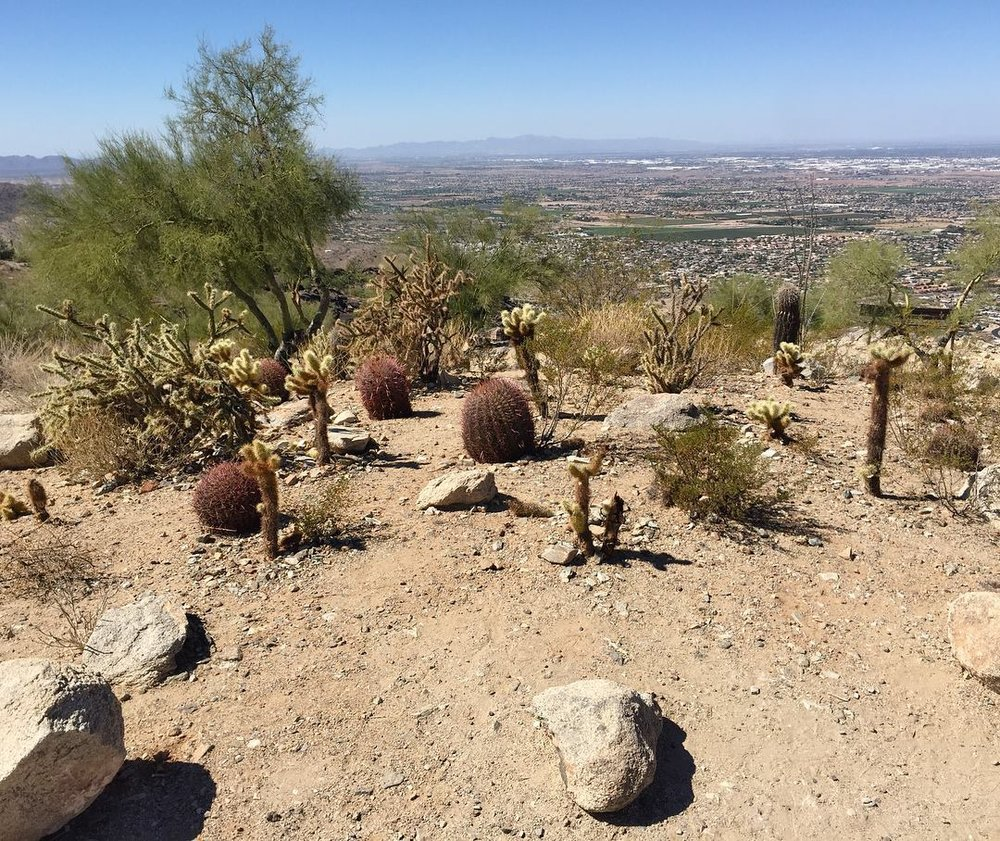 Native cacti, and the Phoenix Valley