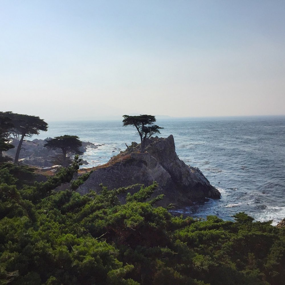 The Lone Cypress at Monterey